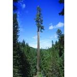 Plakát TREE CLIMBERS